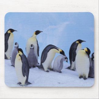Antarctica, Emporer Penguin ((Aptenodytes Mouse Pad
