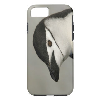 Antarctica, Half Moon Island. Close-up of adult iPhone 8/7 Case