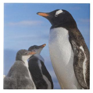 Antarctica, Neko Cove (Harbour). Gentoo penguin 2 Ceramic Tile