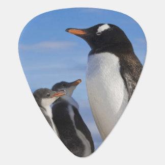 Antarctica, Neko Cove (Harbour). Gentoo penguin 2 Guitar Pick