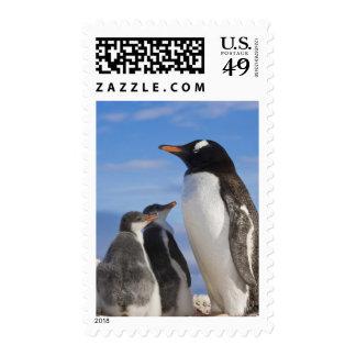 Antarctica, Neko Cove (Harbour). Gentoo penguin 2 Postage