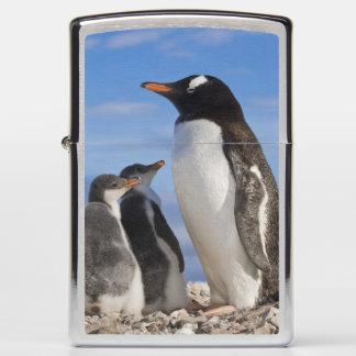 Antarctica, Neko Cove (Harbour). Gentoo penguin 2 Zippo Lighter