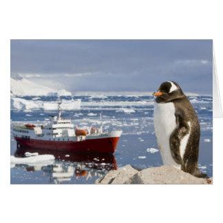 Antarctica, Neko Cove (Harbour). Gentoo penguin Card
