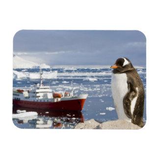 Antarctica, Neko Cove (Harbour). Gentoo penguin Magnet