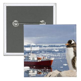 Antarctica, Neko Cove (Harbour). Gentoo penguin Pinback Button