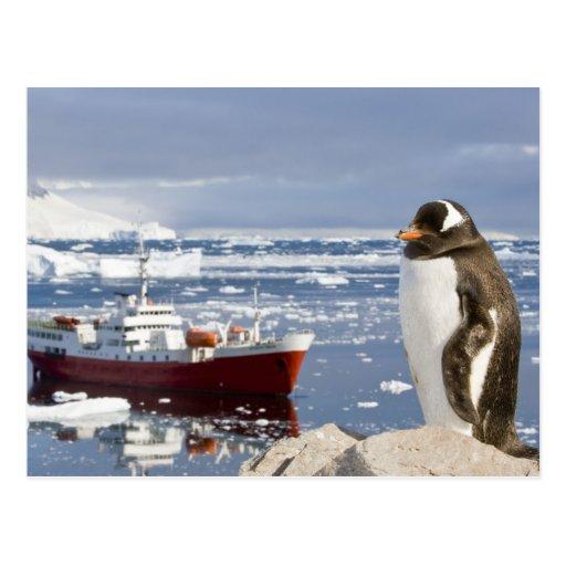 Antarctica, Neko Cove (Harbour). Gentoo penguin Postcard