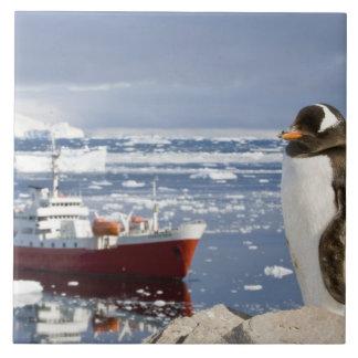 Antarctica, Neko Cove (Harbour). Gentoo penguin Tile