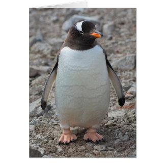 Antarctica. Neko Harbor. Gentoo Penguin 2 Card