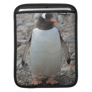 Antarctica. Neko Harbor. Gentoo Penguin 2 Sleeve For iPads