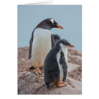 Antarctica. Neko Harbor. Gentoo Penguin 3 Card