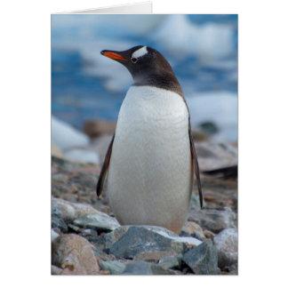 Antarctica. Neko Harbor. Gentoo Penguin Card