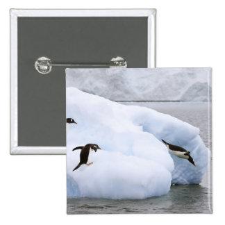 Antarctica, Neko Harbor. One gentoo penguin Pins