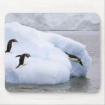 Antarctica, Neko Harbor. One gentoo penguin Mouse Pad
