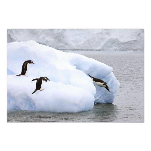 Antarctica, Neko Harbor. One gentoo penguin Photo Print