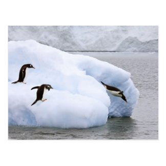 Antarctica, Neko Harbor. One gentoo penguin Postcard