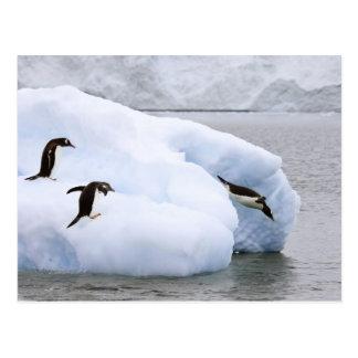 Antarctica, Neko Harbor. One gentoo penguin Postcard