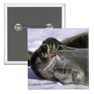 Antarctica Nelson Island Southern Furl seal Buttons