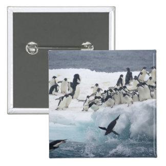 Antarctica Paulet Island Adelie penguins Buttons