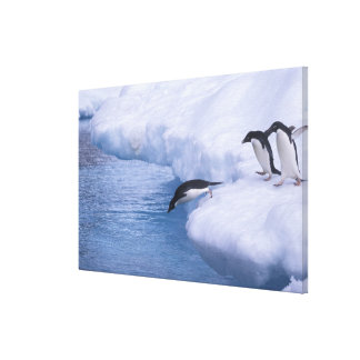 Antarctica, Paulet Island. Adelie penguins dive Canvas Print