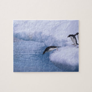 Antarctica, Paulet Island. Adelie penguins dive Jigsaw Puzzles