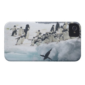 Antarctica, Paulet Island. Adelie penguins iPhone 4 Cover