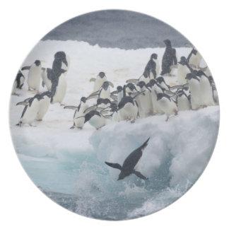 Antarctica, Paulet Island. Adelie penguins Party Plates