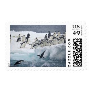 Antarctica, Paulet Island. Adelie penguins Postage Stamp