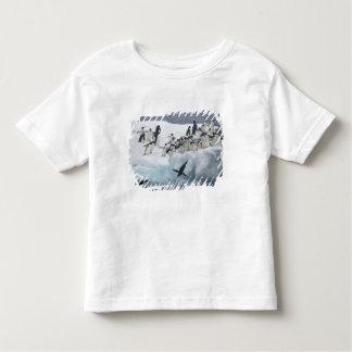 Antarctica, Paulet Island. Adelie penguins Toddler T-shirt