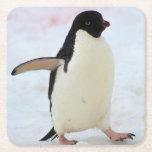 "Antarctica. Petermann Island. Adelie penguin Square Paper Coaster<br><div class=""desc"">Antarctica. Petermann Island. Adelie penguin (Pygoscelis adeliae) | Inger Hogstrom / DanitaDelimont.com</div>"