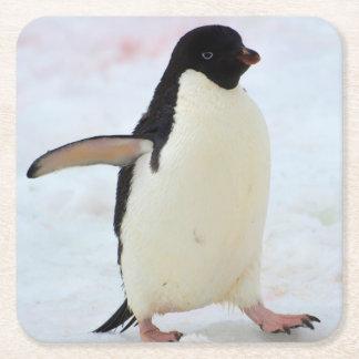 Antarctica. Petermann Island. Adelie penguin Square Paper Coaster