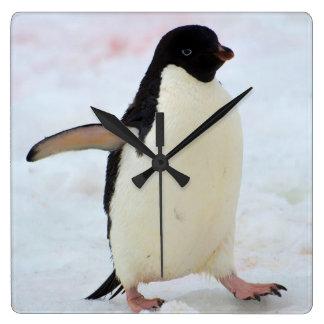 Antarctica. Petermann Island. Adelie penguin Square Wall Clock
