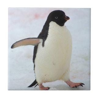 Antarctica. Petermann Island. Adelie penguin Tile