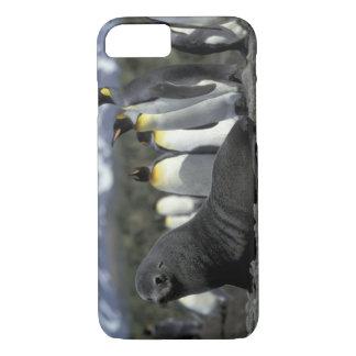Antarctica, South Georgia Island. Antarctic fur iPhone 7 Case