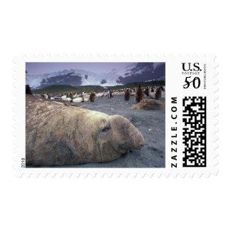 Antarctica, South Georgia Island, Elephant seal Postage