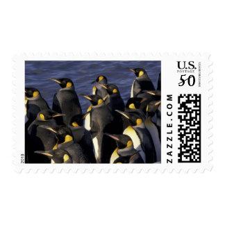 Antarctica, South Georgia Island. King penguins 2 Postage