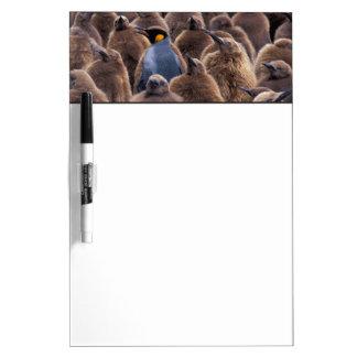Antarctica, South Georgia Island, King penguins Dry-Erase Board
