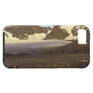 Antarctica, South Georgia Island. King penguins iPhone SE/5/5s Case