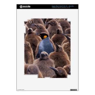 Antarctica, South Georgia Island, King penguins Decals For iPad 3