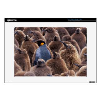 "Antarctica, South Georgia Island, King penguins 15"" Laptop Decals"