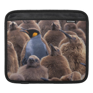 Antarctica, South Georgia Island, King penguins Sleeve For iPads