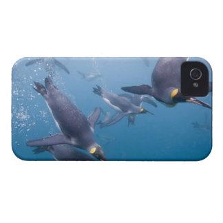 Antarctica, South Georgia Island (UK), 2 iPhone 4 Cases