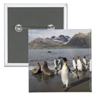 Antarctica, South Georgia Island (UK), Antarctic 2 2 Inch Square Button