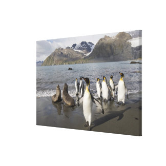 Antarctica, South Georgia Island (UK), Antarctic 2 Canvas Print
