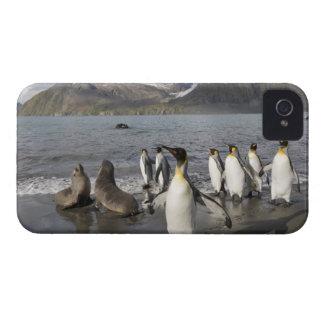 Antarctica, South Georgia Island (UK), Antarctic 2 Case-Mate iPhone 4 Cases