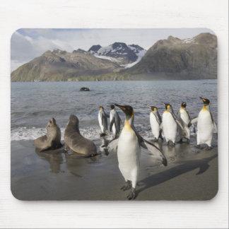 Antarctica, South Georgia Island (UK), Antarctic 2 Mouse Pad