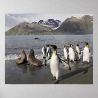 Antarctica, South Georgia Island (UK), Antarctic 2 Poster