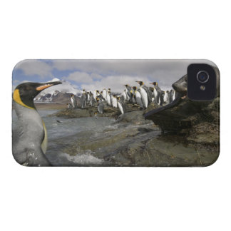 Antarctica, South Georgia Island (UK), Antarctic iPhone 4 Cover