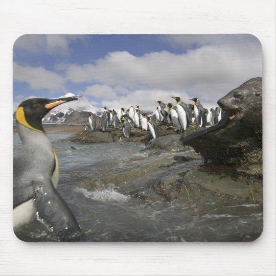 Antarctica, South Georgia Island (UK), Antarctic Mouse Pad