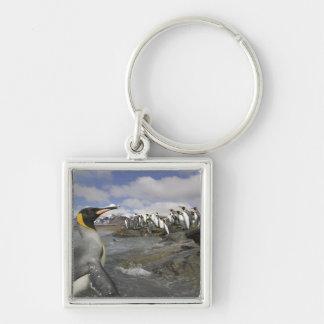 Antarctica, South Georgia Island (UK), Antarctic Silver-Colored Square Keychain