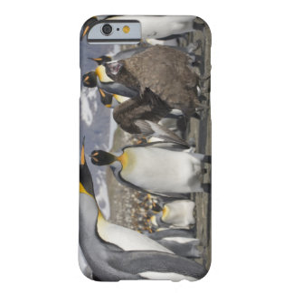 Antarctica, South Georgia Island (UK), Brown Barely There iPhone 6 Case